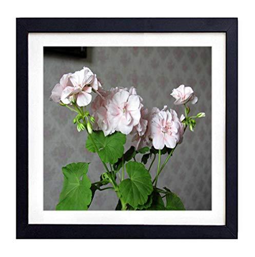GLITZFAS PRINTS Framed Wall Art - Geranium Flower Leaves Room Wallpaper - Art Print Black Wood Framed Wall Art Picture for Home Decoration - 18