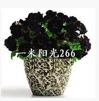 Poppy Flower Organic Horn - 100 Pcs/Pack Mix Garden Petunia Shuttlecock Flower Horn Bonsai Flower Plant #qif50e