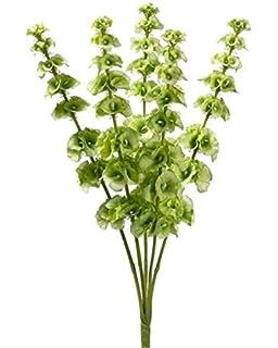 Amazon 29 bells of ireland spray light green pack of 12 wedding flowers 21 light green bells of ireland bush silk home party decor 5 stems mightylinksfo