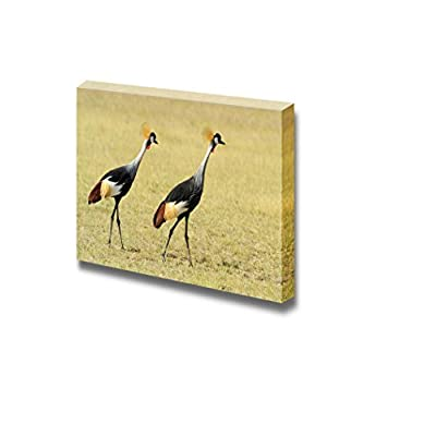 Grey Crowned Crane Balearica Regulorum Gibbericeps Kenya Africa - Canvas Art Wall Art - 12