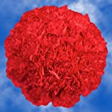 GlobalRose 300 Fresh Cut Red Carnations - Fresh Flowers Wholesale Express Delivery