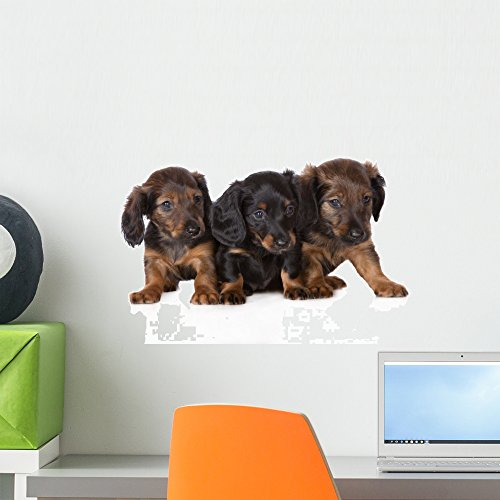 Wallmonkeys WM359418 Three Dachshund Puppies on White Peel and Stick Wall Decals (18 in W x 12 in H), Small