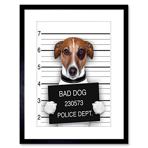 Frame Russell Jack - Wee Blue Coo Jack Russell Dog Mugshot Police Picture Photo Art Print Framed Poster Wall Decor 9x7 inch