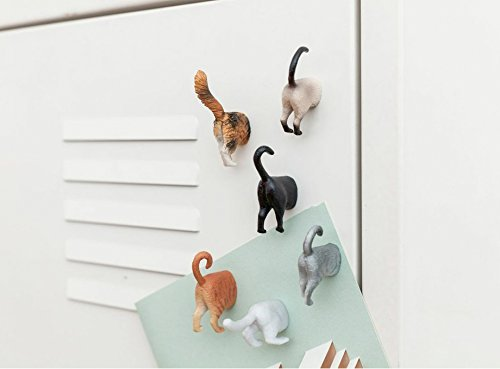 Hoovy Cat Butt Refrigerator Picture Magnets: 6 Cute & Funny Decorative Kitten Photo Magnets for Fridge  Cat Lover Gift Set