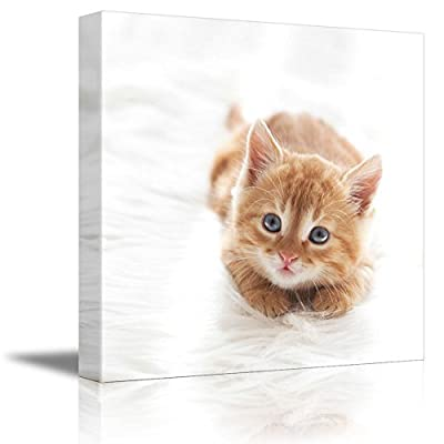 Cute Little Red Kitten Cat Lies on White Fur Blanket Cute Pet Animal Photograph - Canvas Art Wall Art - 16