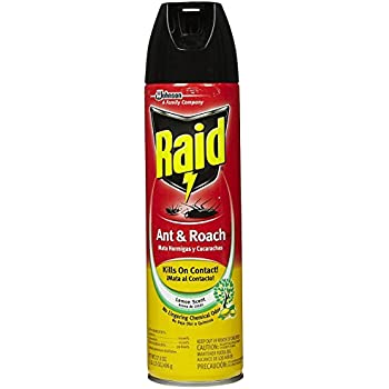 Raid Ant and Roach Aerosol, Lemon Scent, 17.5-Ounce