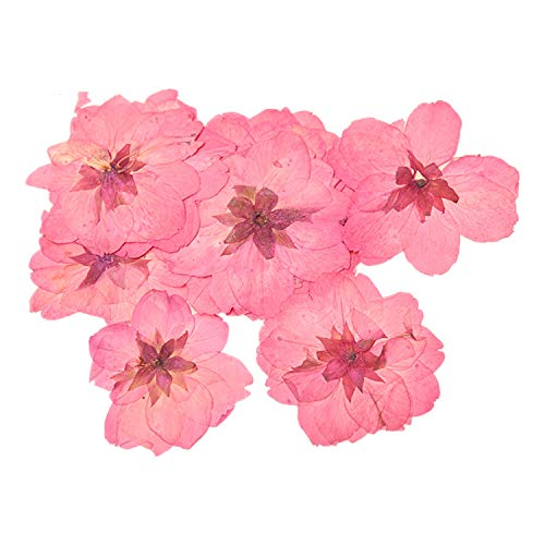 Monrocco 24 Piece Real Flower Sakura Dried Cherry Blossom Pressed Dried Flowers for Jewelry Phone Case Frame Making Scrapbook Accessories
