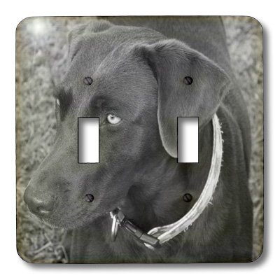 3dRose lsp_14144_2 Chocolate Lab Black And White Double Toggle Switch