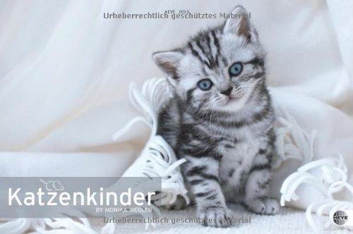 Katzenkinder Posterkalender 2013