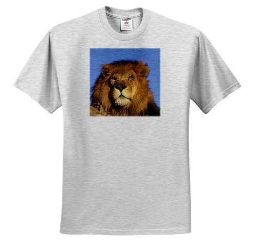 Danita Delimont - Lions - Africa. Male African Lion (Panthera leo) - NA02 SWE0032 - Stuart Westmorland - T-Shirts - Adult Birch-Gray-T-Shirt Medium (African Lion Panthera Leo)