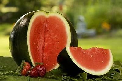 50 Sugar Baby Watermelon Seeds Citrullus Lanatus by RDR Seeds