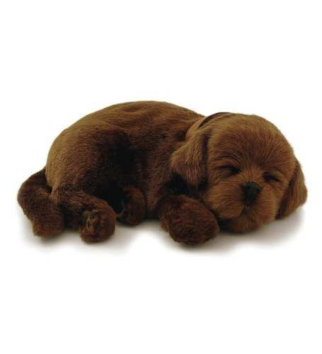 Perfect Petzzz Chocolate Lab Puppy (Chocolate Lab Puppies)