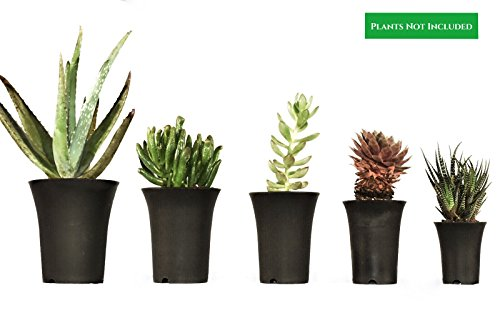 Succulent Pots (5-Pack) Mini Planters for Indoor & Outdoor Flower or Herb Gardening | Reusable, Heavy-Duty, Black Plastic | Desk, Office, Kitchen Use – by Circa Garden Review