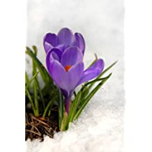 Crocus Flower in the Snow Journal: 150 page lined notebook/diary