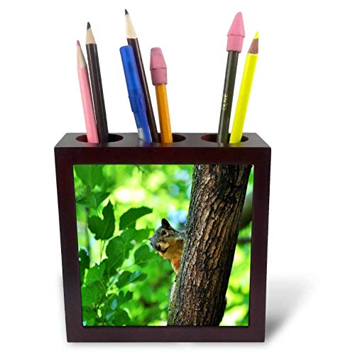 3dRose Dreamscapes by Leslie - Animals - Ground Squirrel in a Tree Playing peek a Boo - 5 inch Tile Pen Holder (ph_292265_1)