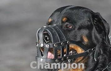 Mastiff und Anderen /Ähnlichen Schnauze. Champion Licht Leder Hund Maulkorb f/ür Rottweiler