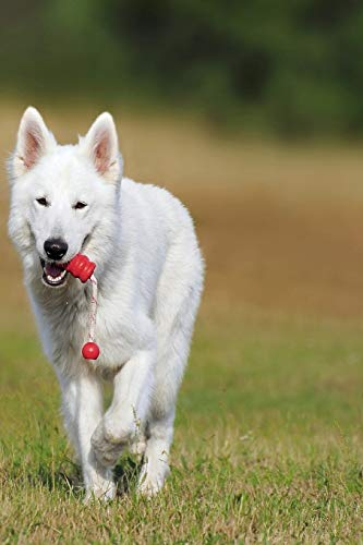 SWISS SHEPHERD: The White Swiss Shepherd Dog became the 219th pedigree dog breed to be recognized by the Kennel Club in October 2017. The breed is ... Group on the Imported Breed Register. 1