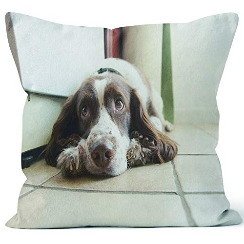 Nine City English Springer Spaniel Soulful Eyes Throw Pillow Cushion Cover,HD Printing Decorative Square Accent Pillow Case,40