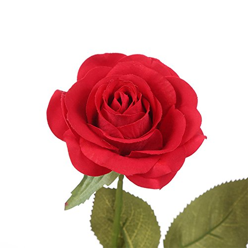 Alapaste Beauty and The Beast Rose,Red Silk Rose in Glass Dome, Preserved Flowers LED Light with Fallen Petals on a Wooden Base,Gift for Valentine's Day Anniversary Wedding Birthday