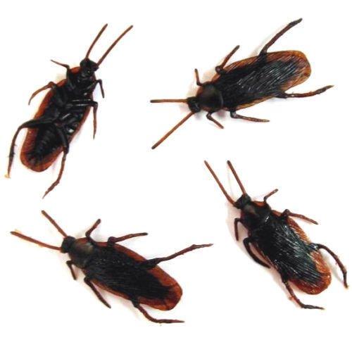 10pcs Realistic Cockroach Lifelike (Haunted House Prop Ideas)