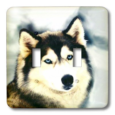 - lsp_517_2 Dogs Siberian Husky - Staring Siberian Husky - Light Switch Covers - double toggle switch