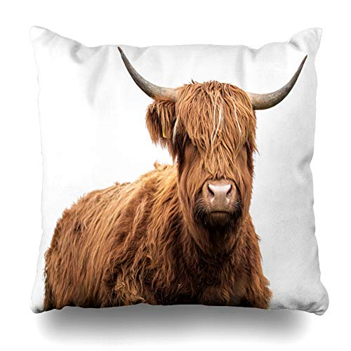 - NOWCustom Throw Pillow Cover Cattle Brown Highland Scottish Cow On White Wildlife Agriculture Red Beef Bull Farm Design Hair Zippered Pillowcase Square Size 18 x 18 Inches Home Decor Pillow Case