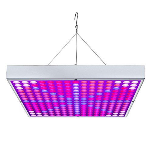 Apollo 8 Led Grow Light Review