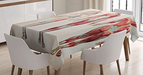 Ambesonne Human Anatomy Tablecloth, Vintage Chart of Body Front Back Skeleton and Muscle System Bone Mass Graphic, Dining Room Kitchen Rectangular Table Cover, 52 W X 70 L Inches, Ruby Cream
