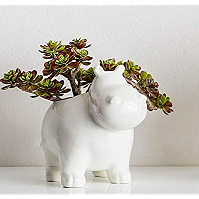 Mini Ceramic Planter Small Succulent Cacti Container Air Decorative Plants Indoor or Outdoor Glazed White Color Nature Inspired (Hippo) : Garden & Outdoor