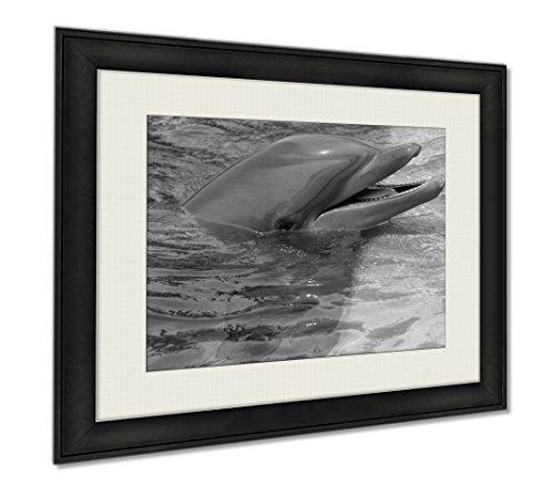 Ashley Framed Prints Smiling Dolphin, Wall Art Home Decoration, Black/White, 30x35 (frame size), AG5916847 by Ashley Framed Prints