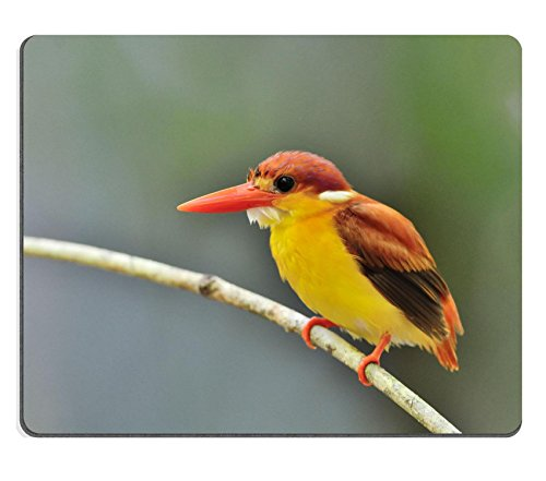 Luxlady Mouse Pad Natural Rubber Mousepad IMAGE ID 31333271 Bird Rufous backed Kingfisher Thailand