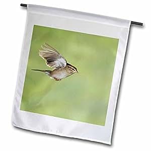 Danita Delimont - Birds - Chipping Sparrow bird, Hill Country, Texas - NA02 RNU0060 - Rolf Nussbaumer - 18 x 27 inch Garden Flag (fl_84229_2)