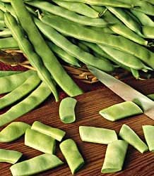 Bean Roma II (Bush) 1,000 seeds