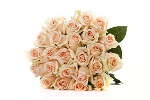 Martha Stewart Roses by BloomsyBox - Two Dozen Peach Alejandra Roses Selected by Martha and Hand-Tied, Long Vase Life