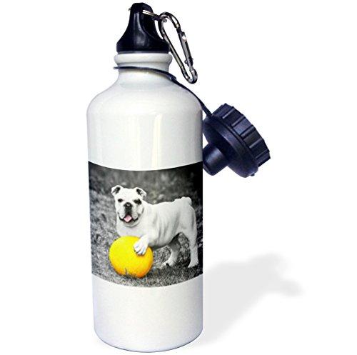3dRose RinaPiro - Dogs - French Bulldog. Playful dog. Cool image. - 21 oz Sports Water Bottle (Playful Bulldog)