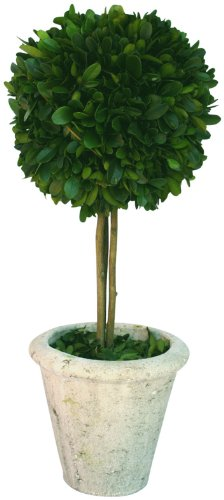 Mills Floral Company Box Topiary, Single, Large, 6
