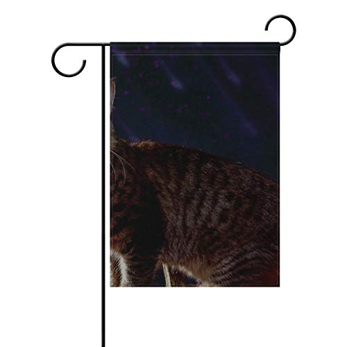 Your Home Garden Flag Cat Halloween Fluffy Pumpkin 12x18 Inches(Without Flagpole) ()