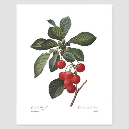 Cherry Art (Kitchen Wall Decor, Fruit Print, Red Berry Botanical) Pierre Redoute - Unframed