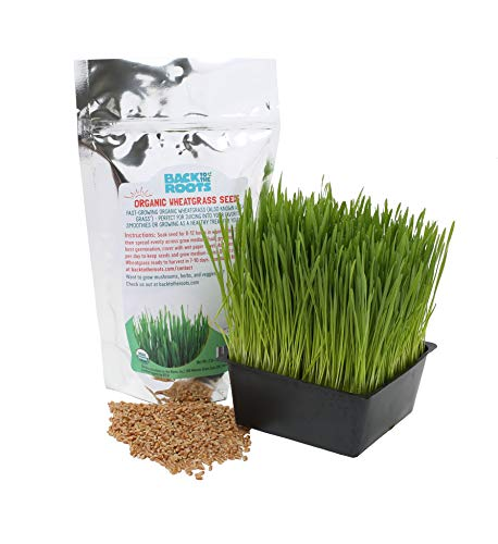 - Back to the Roots Organic Cat Grass Seeds, Wheatgrass Seeds for Planting, 2lb Bag, Grow Wheatgrass Plant Indoors in 5-7 Days, Guaranteed to Grow, Natural Hairball Remedy for Cats, Non-GMO, Made in USA