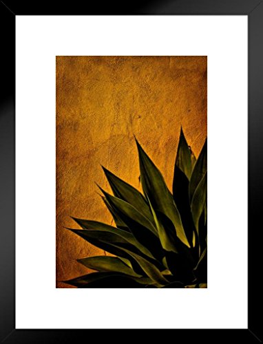 (Poster Foundry Agave On Adobe Sunset by Chris Lord Photo Art Print Matted Framed Wall Art 20x26 inch)