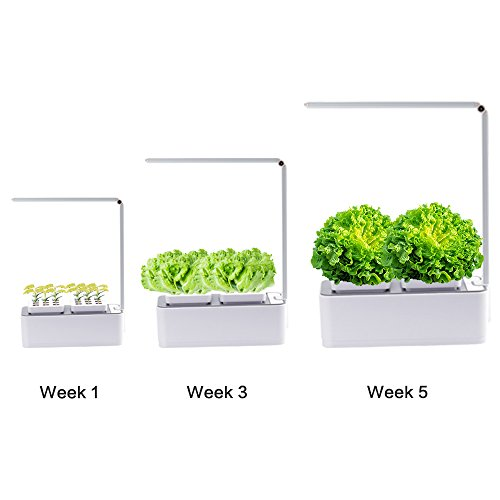 Indoor Herb Garden, AIBIS Hydroponics Watering Growing System, Organic Home Herbs Gardening Kit with Led Grow Light, Not Contain Seeds, Best for Flower and Vegetable like Thyme, Mint and Tomato(White) by AIBIS (Image #5)