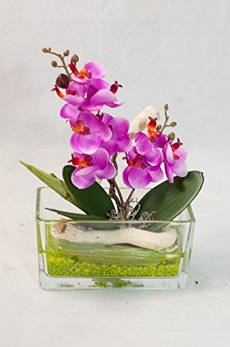 Planta De Phalaenopsis Rosa En Un Plato De Vidrio