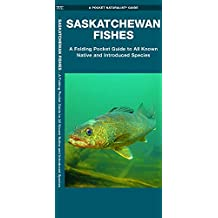 Saskatchewan Fishes: A Folding Pocket Guide to All Known Native and Introduced Species