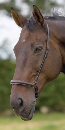 Shires Equestrian Cavesson Noseband - Size:Cob Color:Plain Dark Havana