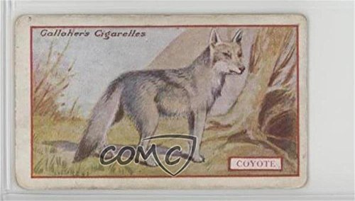 Coyote Ungraded COMC Good to VG-EX (Trading Card) 1921 Gallaher Animals & Birds of Commercial Value - Tobacco [Base] #79 from Gallaher Animals & Birds of Commercial Value