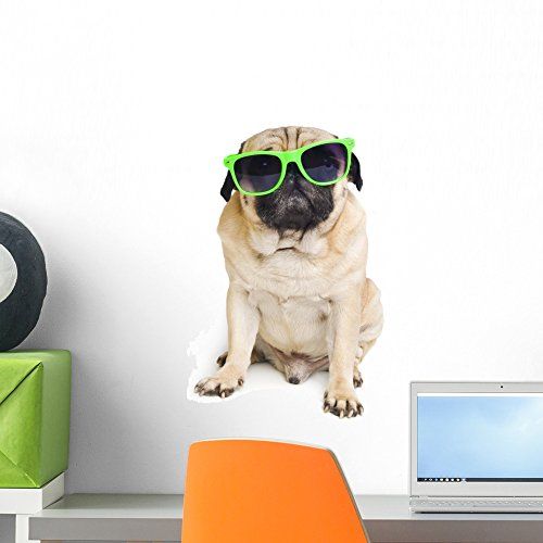 Pug with Sunglasses Wall Decal by Wallmonkeys Peel and Stick Graphic (18 in H x 11 in W) - Sunglasses Prices Pugs