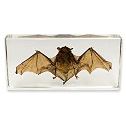 Real Bat in Acrylic Block - Medium
