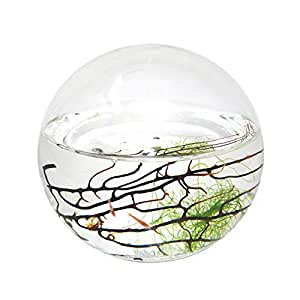 Amazon Com Ecosphere Closed Aquatic Ecosystem Small Sphere