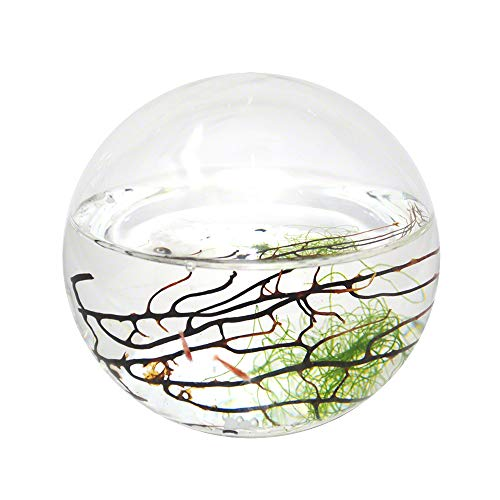 EcoSphere Closed Aquatic Ecosystem, Small -