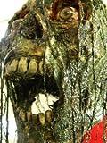 Halloween Horror Movie Prop Human Corpse Skull Head ''Toxic Tanner''